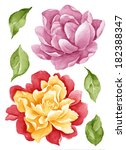 watercolor illustration flower... | Shutterstock . vector #182388347