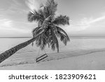 Black And White Tropical Beach...