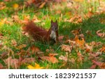 Squirrel Playing In The Autumn...