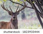 Amazing Portrait Of Red Deer...