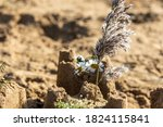 Small photo of sandcastles on beach with flowers on top, focus on foreground sandcastle