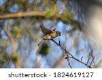 Sparrow Sitting On A Tree Twig