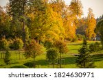 Meadows With Spherical Linden...