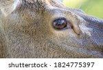 Closeup Photo Of The Eye Of An...