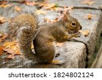 Squirrel With A Dirty Face ...