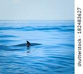 fin of a shark in the high sea | Shutterstock . vector #182483627