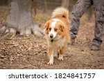 Cute Blind Happy Mix Breed Dog...