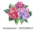 Bouquet Of Hydrangea Flowers On ...