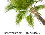 Under Coconut Tree On The Whit...