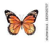 Monarch Butterfly Orange...