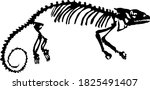 The Silhouette Of The Skeleton...