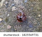 Snail With A Broken Shell On...