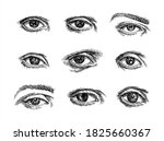 sketch engraving style. hand... | Shutterstock .eps vector #1825660367