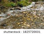 mountain stream in the altai... | Shutterstock . vector #1825720031