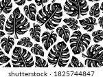 black and white monstera...   Shutterstock .eps vector #1825744847