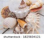 Various Seashells Background...