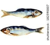 Herring Fish. Watercolor...