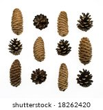 pine and fir cones isolated on... | Shutterstock . vector #18262420