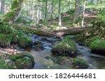 A Small River In The Thuringia...