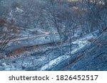 Wildfires Destroy Numerous...