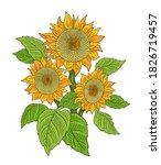 sunflower drawing sketch.... | Shutterstock .eps vector #1826719457