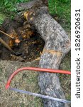 Uprooting Old Dry Fruit Tree I...