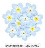 forget me nots | Shutterstock .eps vector #18270967