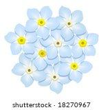 forget me nots   Shutterstock .eps vector #18270967