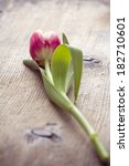 Spring Tulip On Wooden Table