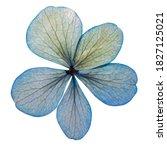 Pressed Hydrangea Flower...