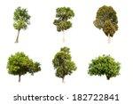 Collection Of Irvingia Malayana ...