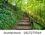 Deep Forest Hiking Trail....