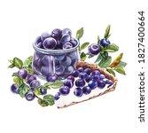 blueberry. watercolor botanical ... | Shutterstock . vector #1827400664