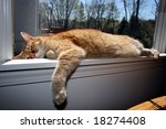 Stock photo tabby cat sleeping on window ledge 18274408
