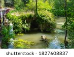 Green Stagnant Water In A...