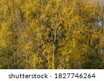 Colorful Nature Autumn...