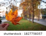 Autumn Leaf  Leaf Platanus  In...