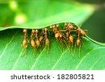 Unity Of Ants