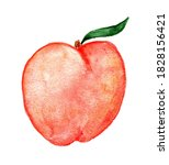 Peaches Watercolor Illustration ...