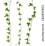 set of straight ivy stems... | Shutterstock . vector #182835821