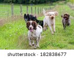 Stock photo happy healthy dogs enjoying a run in the park 182838677