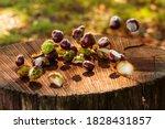 Chestnuts On A Round Flat Stum...