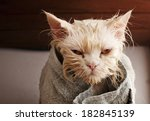 Stock photo wet cat after a bath wrapped in a towel 182845139