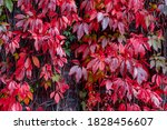 Colourful Leaves In Autumn ...