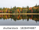 Tree Reflection In Algonquin...