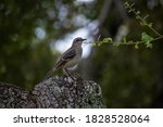 Bird Perched On A Dry Trunk