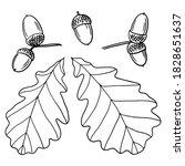 hand drawn oak leaves and acorns | Shutterstock .eps vector #1828651637