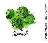 illustration of spinach. vector ... | Shutterstock .eps vector #1828724294
