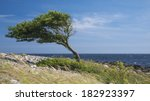 Lonely Tree Bent By The Wind A...