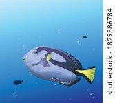 A Blue Tang Fish Illustration....